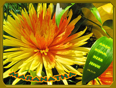 Maranatha (Martin Volpert) Tags: flower fleur blossom flor blossoms pflanze kirche blumen bible sensational blomma blume bibbia fiore blte blomst bibel virg gemeinde lore biblia bloem blten blm iek floro kwiat flos ciuri bijbel kvet maranatha kukka cvijet ecclesia flouer blth cvet zieds bibelvers is floare  blome iedas bibelverskarte mavo43 inspiredbyhim yellowyelloweverywhere amenkommherrjesus amencomelordjesus offenbarung2020 revelation2022