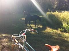 Betty and wild horses (PuzzleandJax) Tags: hammered grand betty foy brooks bois b17s rivendell honjo hetre
