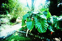 IMG_0003 (spoeker) Tags: selfportrait fauna analog 35mm garden lomo xpro lomography costarica wide slide dia analogue botanicgarden garten kb planzen selbstportrt botanischergarten golfito golfodulce lcwide