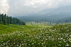 As close as possible to paradise (PKG Photography) Tags: scale danger freedom landscapes control altitude fear joy scenic happiness security save safety growth attitude desire fantasy journey scenary hero learning shock motivation strength heroes kashmir spirituality care comfort excitement endurance discovery challenge enjoyment zone courage determination confidence skill aspirations expertise gulmarg effortless conquering savetrees kashmirtourism saveforests kashmirwallpapers pkgphotography gettyimagesindiaq4