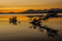 Calm in Calafquén (Daniel Sziklai G.) Tags: chile sunset orange lake tree water reflections landscape flood dusk invierno coñaripe calafquén regióndelosríos bestcapturesaoi elitegalleryaoi blinkagain bestofblinkwinners blinksuperstars