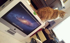 bailey helping me set-up my parents' new iMac