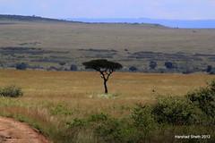 Savanah of Masai Mara Landscape (EagleEye8) Tags: elephant buffalo kenya lion safari masaimara marariver harshadsheth eagleey8