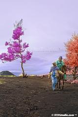 Izar (Infrared) (2121studio) Tags: nature indonesia ir nikon asia surrealism dream nikond50 ali illusion malaysia infrared indah wonderland kuantan alam mountbromo mimpi nikonian eastjava malaysianphotographer jawatimur probolinggo travelphotographer ngadisari ilusi khayalan bromotenggersemeru convertedinfraredcamera 2121studio kuantanphotographer pahangphotographer cemaralawang ciptaanallahswt malaysianinfraredphotographer psygangnamstyle