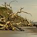 Driftwood Beach 4