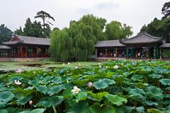 ??? / Garden of Harmonious Interests / ???? ???????? ??????