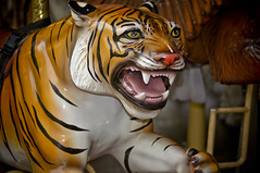 Tiger Merry go Round A (larryn2009) Tags: california orange fall animal mammal zoo sandiego tiger unitedstatesofamerica carousel september merrygoround 2012 sandiegocounty amusementrides sandiegosafaripark