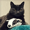 the black cat and the badger (Black Cat Photos) Tags: blackcatphotos badgermonday