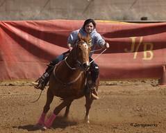 Dewey Barrel Race (Garagewerks) Tags: arizona horse woman sport female race all sony country barrel arena rodeo dewey cowgirl athlete equine 50500mm views50 views100 views200 views400 views300 views250 views150 views350 views450 f4563 slta77v