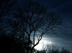 Good Night (Emil de Jong - Kijklens) Tags: mars moon tree night dark nacht boom donker maan