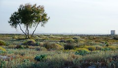Salinas y Arenales de San Pedro del Pinatar 8613 (Gabriel Navarro Carretero) Tags: verde green casa plantas salinas amarillo rbol sandbanks dunas arenales sanpedrodelpinatar