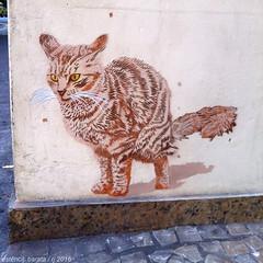 IMG_4819web (Alvaro Barata) Tags: streetart cat stencil estencil