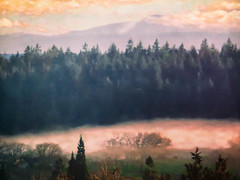 Mists of Dreamland (Colormaniac too) Tags: morning trees misty clouds landscape mood atmosphere olympicpeninsula sequim collection dreams pacificnorthwest dreamy nik washingtonstate dreamland mists distressedtextures
