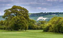Big Lion Spotted in English Countryside (paulinuk99999 - just no time :() Tags: white green english landscape spring lion may bedfordshire whipsnade 2016 ivinghoebeacon dagnall paulinuk99999 sal70400g