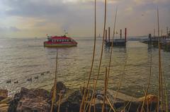 Destination Red Hook (Jeffrey Friedkin) Tags: city nyc newyork water ferry brooklyn boat geese newyorker statueofliberty cityscene newyorkphoto