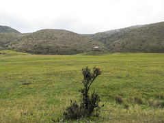 """Le Parc National Cotopaxi: une plante qui ne pousse qu'en très haute altitude (l'edelweiss équatorienne) <a style=""""margin-left:10px; font-size:0.8em;"""" href=""""http://www.flickr.com/photos/127723101@N04/26834460674/"""" target=""""_blank"""">@flickr</a>"""