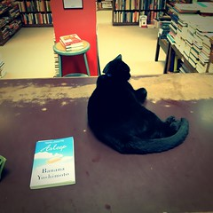 09 may 16 (11)a (beihouphotography) Tags: cats dusty cat square lawrence downtown books 11 bookshelf bookstore kansas fujifilm format x30