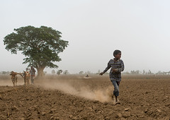 Boy running in a dry field, Kembata, Alaba kuito, Ethiopia (Eric Lafforgue) Tags: africa boy people plant man color men beautiful field animal horizontal landscape mammal outdoors countryside cow scenery quiet african farming scenic culture peaceful dry tribal ox domestic land environment daytime produce farmer plow copyspace agriculture ethiopia dust ethnic plowing pulling 2people tranquil planting cultivation hornofafrica developing ethiopian eastafrica abyssinia ruralscene fulllenght alaba fertileland kembata alabakuito ethio162698