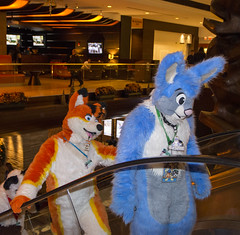 _DSC3627 (Acrufox) Tags: midwest furfest 2015 furry convention december hyatt regency ohare rosemont chicago illinois acrufox fursuit fursuiting mff2015