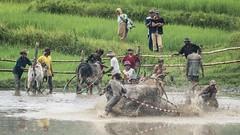 36a_20160315-171432-_DSC5558 (trueforever) Tags: indonesia ibis bukittinggi padang novotel pagaruyung minangkabau jamgadang lembahharau westsumatera batusangkar tanahdatar ngaraisianok padangpanjang pacujawi padangpariaman