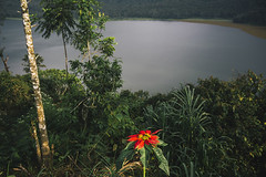 Buyan lake (Marina Nozyer) Tags: red bali lake flower green water grass contrast indonesia bedugul buyan