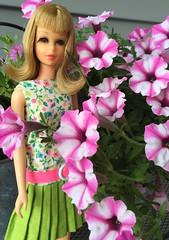 Superfrancie (Foxy Belle) Tags: doll flowers petunia supertunia pink white francie mattel vintage blonde flip dress floral green