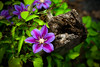 Posted (T-3 Photography) Tags: flowers flower canon 50mm purple fencepost 5dmarkii