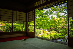 my turn (Myoshin-ji temple, Kyoto) (Marser) Tags: japan garden temple kyoto raw fuji tea  verdant matcha lightroom   xt10