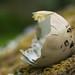 Pheasant egg on moss