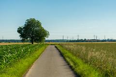 Bume (Holz und Stahl) (JBsLightAndShadow) Tags: road summer field sunshine way nikon sommer feld felder sunny fields heidelberg sonnig weg sonnenschein strase nikond3300 d3300