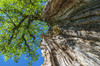 Old tree (pentars) Tags: old sky tree green nature leaves pentax wide medieval da trunk rotten hdr bole 18270mm k5ii