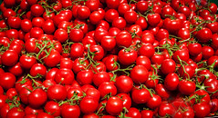 Turkish Tomatoes (Mule67) Tags: 2016turkeytomatoes 2016 turkey tomatoes bright colors red produce 5photosaday