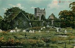 Muckross Abbey (mgjefferies) Tags: ireland abbey postcard eire kerry muckross killarney 1909