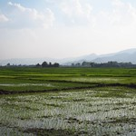 "Rice Field <a style=""margin-left:10px; font-size:0.8em;"" href=""http://www.flickr.com/photos/14315427@N00/6924338310/"" target=""_blank"">@flickr</a>"