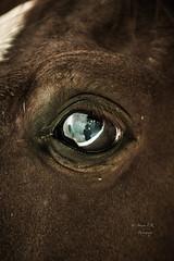 Blink (    , ) Tags: eye eyes nikon d blink 800  qatar d800  qtr      ameera      hoers  q6r   amoora         blinkagain 800
