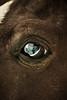 Blink (⌯ ̟՝˻ п̵м̱ọ̯͡໐яྀα ˺ ໋, ৩՞) Tags: eye eyes nikon d blink 800 عين qatar d800 حيوانات qtr قطر الدوحة حيوان عيون حصان ameera انعكاس خيل فرس العربي الاصيل hoers بني q6r أميرة نيكون amoora الحصان اميرة اموره امورة دي اصيل اميره أموره blinkagain 800دي