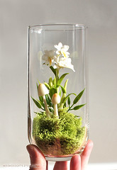 Exotic Dendrobium Orchid Terrarium in Recycled Glass (missmossgifts) Tags: orchid miniature etsy terrarium missmoss lunaclay fauxterrarium miniatureterrarium etsyterrarium