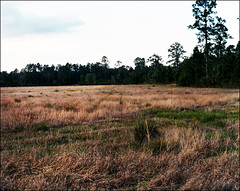 Landscape   4x5. (Ashleigh Brooke   www.Ashleigh-Brooke.com) Tags: film field by landscape photography kodak large brooke 4x5 format ashleigh portra ahern