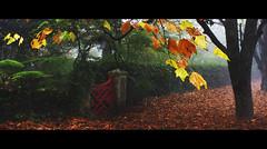 The Little Red Gate || MOUNT WILSON (rhyspope) Tags: road street autumn mist mountain color colour tree fall wet rain fog canon season rainforest track mt bright australia bluemountains trail lane aussie canopy damp mountwilson 500d rhyspope