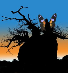 Boab fairy (Robin Hutton) Tags: sunset shadow tree beauty silhouette manipulated fun wings artwork australia silhouete fairy western kimberly fairies mythology sillouete mythical boab silouete farey fayrie winges fayries robinhuttonart