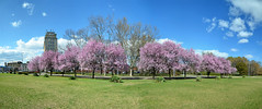 Spring - panorama (angel00) Tags: street city pink blue trees sky panorama cloud flower tree green nature beautiful beauty forest spring nikon purple budapest magenta termszet fa tavasz buliding panorma npliget d7000