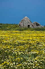 Fascinating Apulia (Photos On The Road) Tags: flowers blue italy verde green abandoned primavera grass yellow vertical rural landscape outside outdoors daylight europa europe italia exterior outdoor traditional nobody nopeople erba southern giallo cielo daytime fiori pietra puglia paesaggio springtime trullo verticale nessuno apulia ostuni tradizionale outdoorshots meridionale rurale fioritura outdoorshot
