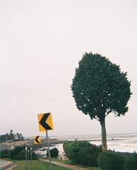 a coastline new hampshire tree shot on 110 C-41 (pineconemonk) Tags: copyright art film analog darkroom digital way fuji kodak 10 go 110 millennium follow direction arrow 100 pocket pointing leaning act 2012 the c41 dmca comosition suggesting instimatic