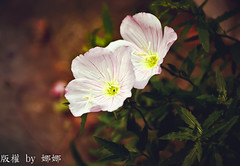 Beautiful flower ( Nana) Tags: life light flower color green colorful natural bokeh taiwan  taiwan beautifulflower amazingdetails