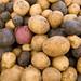 Gibbs Road Farm veggies (June 2012) red white & blue potatoes