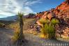 Red Rocks (James Neeley) Tags: landscape handheld redrocks hdr yucca redrockscanyon nationalconservationarea 5xp jamesneeley
