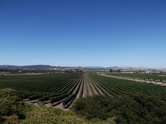 Sonoma (Ryan W Payne) Tags: california usa unitedstates wine sonoma winery grapevine