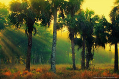 Misty-Morning-at-Riverbend-Park-Jupiter-Florida (Captain Kimo) Tags: morning misty fog landscape florida foggy jupiter palmbeachcounty riverbendpark photomatixpro tonemapping singleexposurehdr jupiterfarms