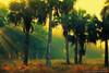 Misty-Morning-at-Riverbend-Park-Jupiter-Florida (Captain Kimo) Tags: morning misty fog landscape florida foggy jupiter palmbeachcounty riverbendpark photomatixpro tonemapping singleexposurehdr jupiterfarms