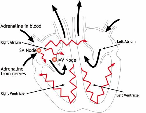 the world s most recently posted photos of diagrams and nutrition Enteral and Parenteral Nutrition heart electrical diagram claireification123 tags pots anatomy diagrams nutrition dysautonomia potscause